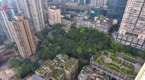 Chongqing People's Park The hidden forest in the city