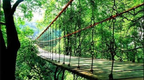 GGII MUST WATCH - Geleshan National Forest Park