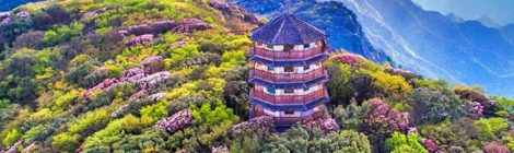 GGII MUST WATCH - Mount Jinfo (Golden Buddha Mountain)