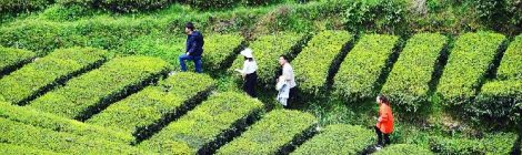 """Western China Tourism Series - Is Chinese tourism going """"rural""""?"""