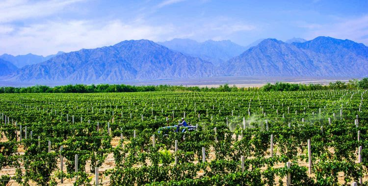Western China Food & Wine Series - Ningxia Wine Region and Wine Tourism Opportunities