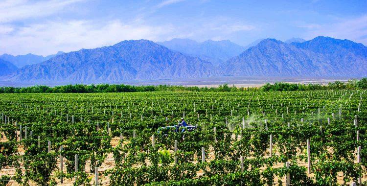 中国西部葡萄酒系列—宁夏产区与葡萄酒旅游的机会